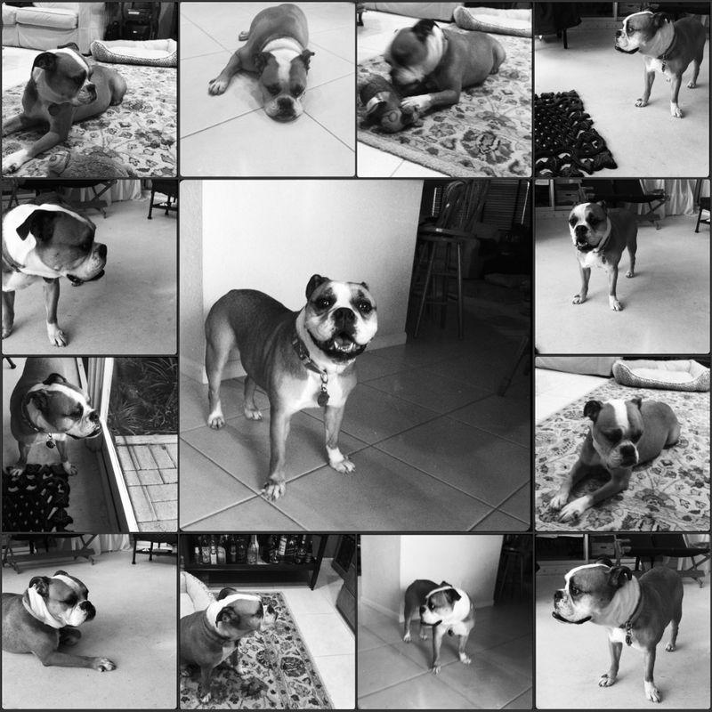 Picnik collage Beula 11-2011