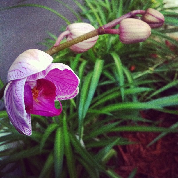 Orchid blooms are starting to open